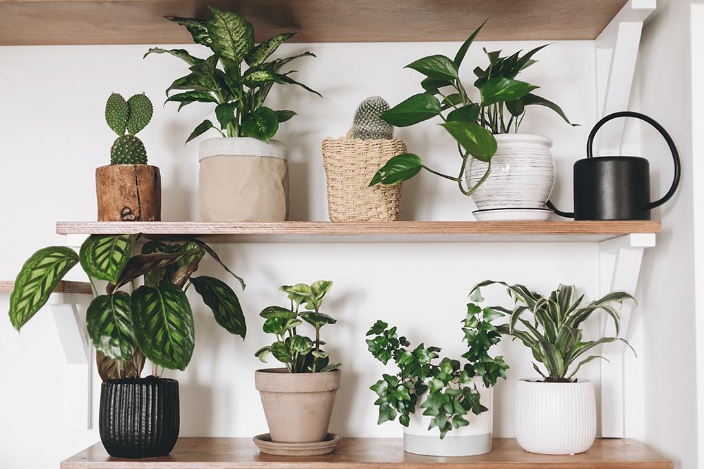 pot plantes vertes d'intérieur
