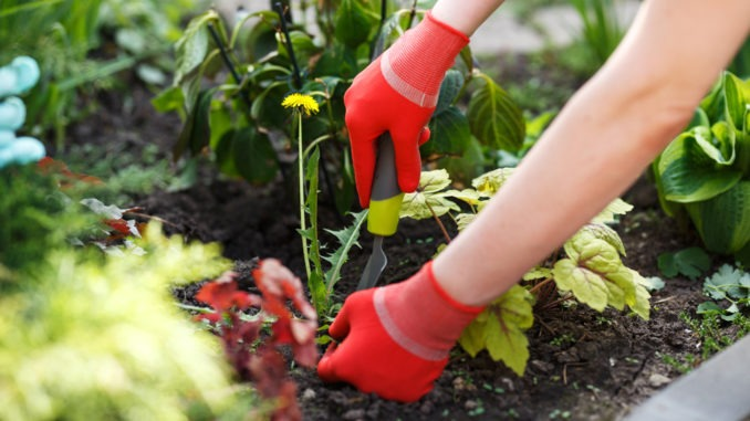 Désherber jardin