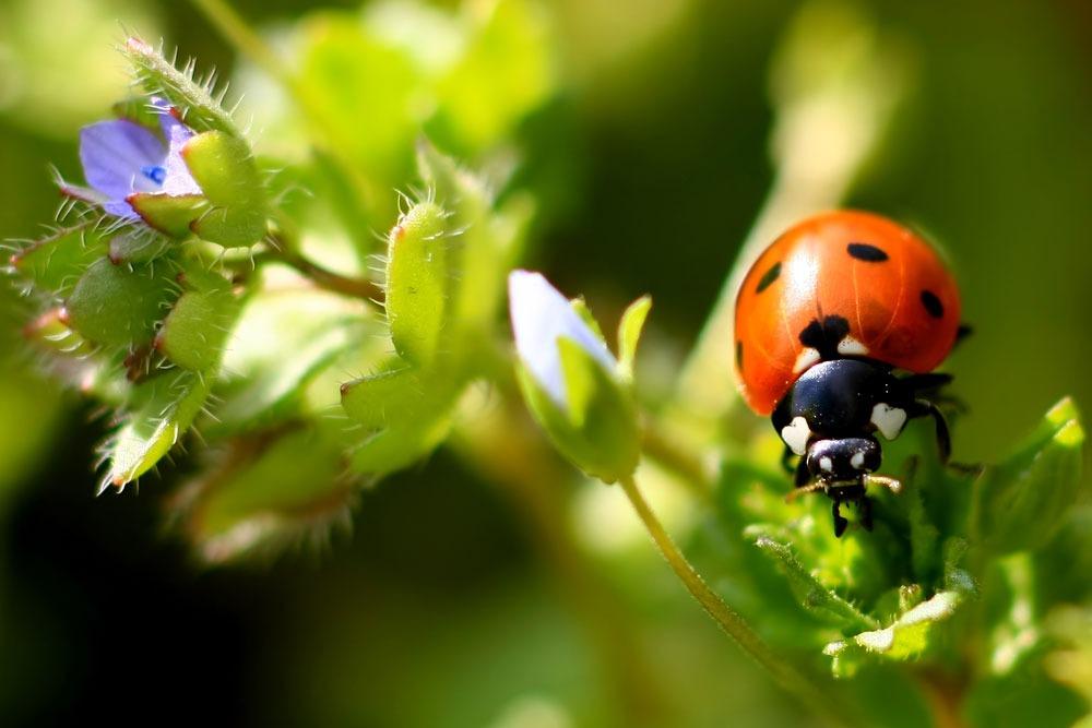 Produits phytosanitaires autorisés à la vente - CTIFL