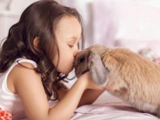 Éduquer un lapin nain