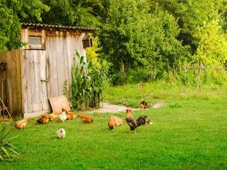 Une mini ferme chez-soi