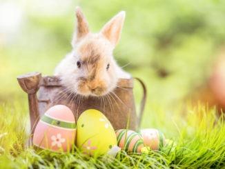 Lapin et œufs de pâques