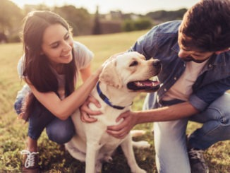 Education positive canine