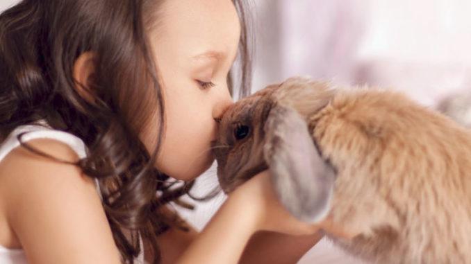 Comment éduquer un lapin