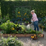Les plantes amies de vos légumes