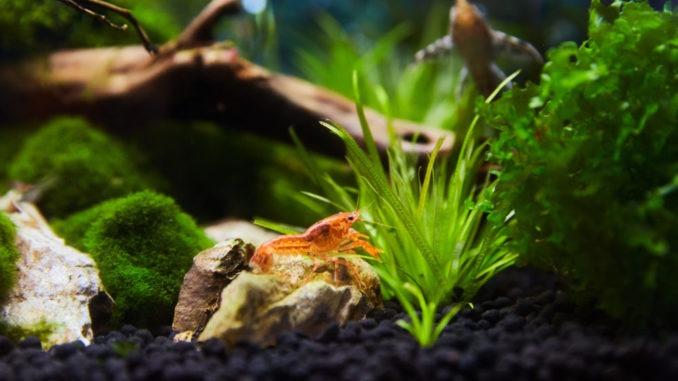 Aqua Nano ou nano aquarium | Mon jardin d\'idées