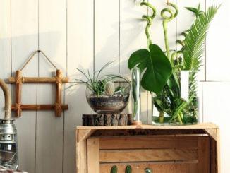 Décoration avec succulentes et cactées