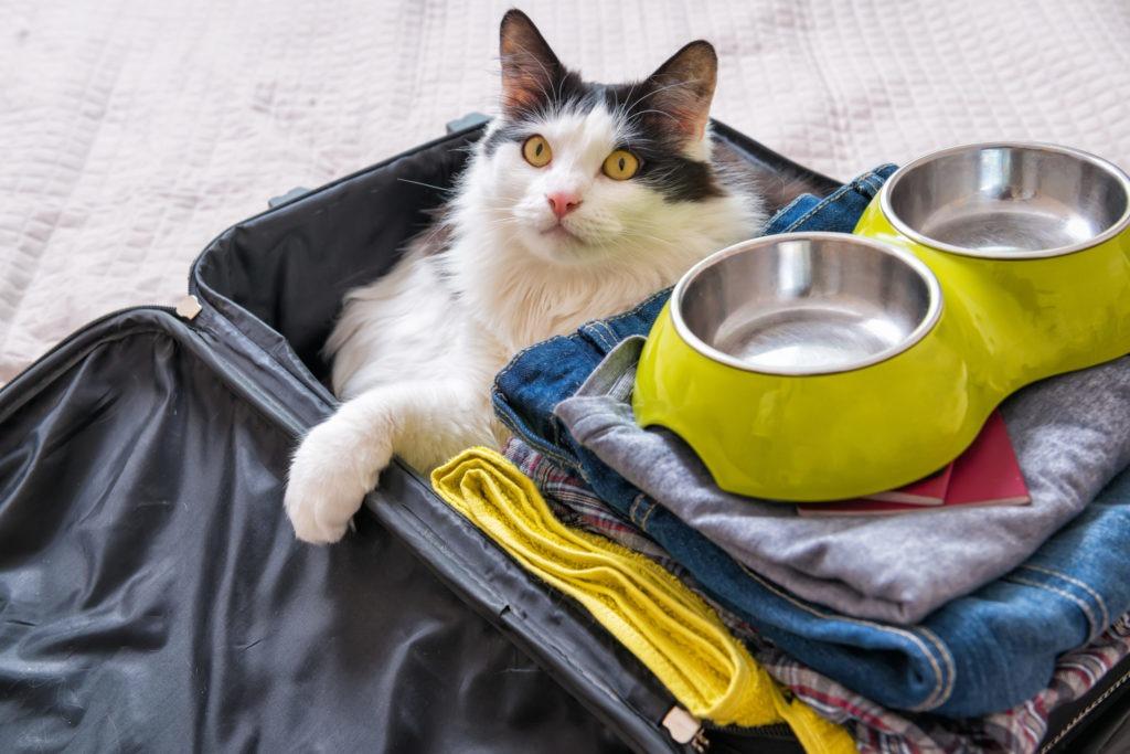 Partir en vacances avec son chat