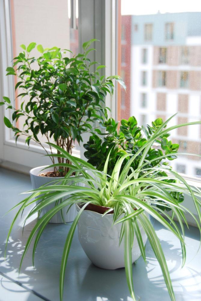 Plantes intérieure
