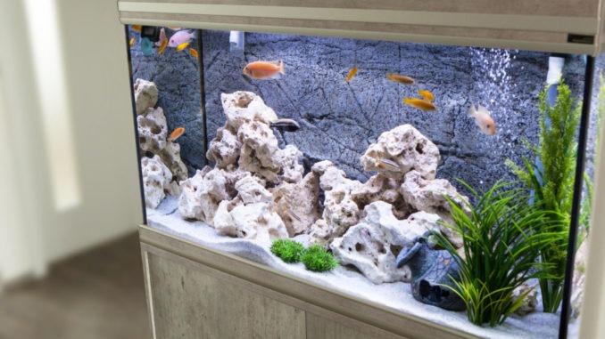 L'aquarium est-il une contrainte ?