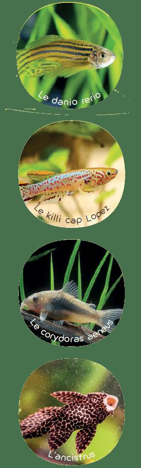 Poissons Faciles A Vivre Pour Aquarium Reussi Mon Jardin D Idees
