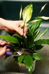 Enlever fleurs