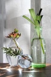 Plantes bouturées