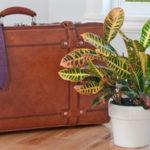Plantes pendant les vacances