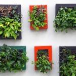 Verticalité plantes