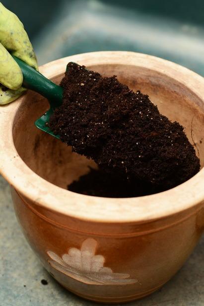 Planter un arum en pot   Mon jardin d'idées