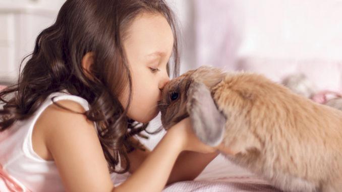 Animal pour enfant
