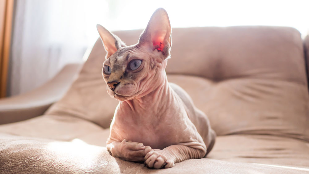 Chat Sphinx