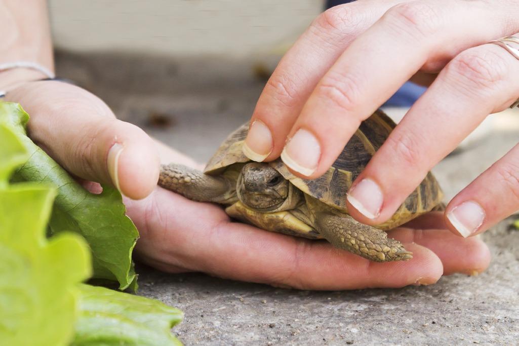 Éduquer tortue