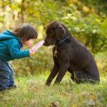 Jouer avec son chien