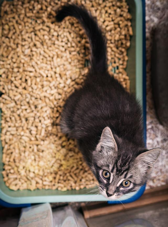 Quelle litière pour mon chat ?