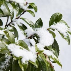 Balayer la neige