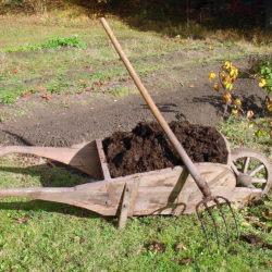Etaler du compost sur le potager