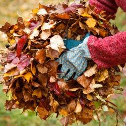 Ramasser les feuilles mortes
