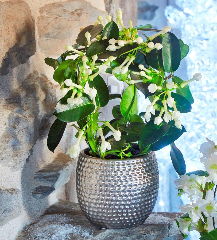 Etoile De Noel Plante Exterieur pour des fêtes fleuries | mon jardin d'idées