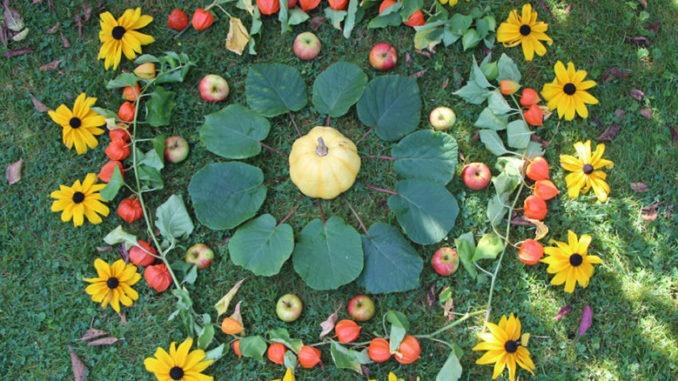 Landart mandala vegetal activité famille