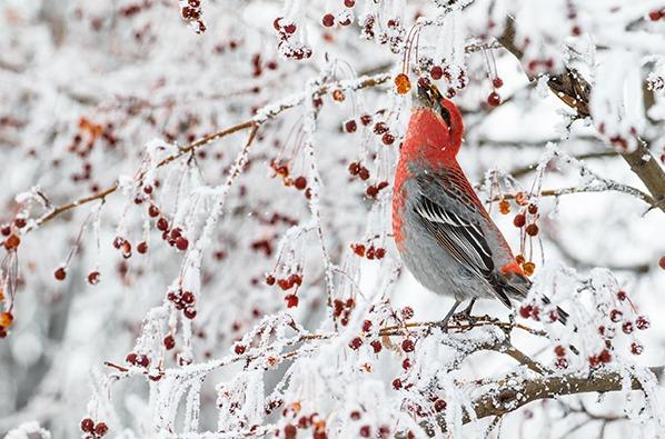 Oiseau hiver baie