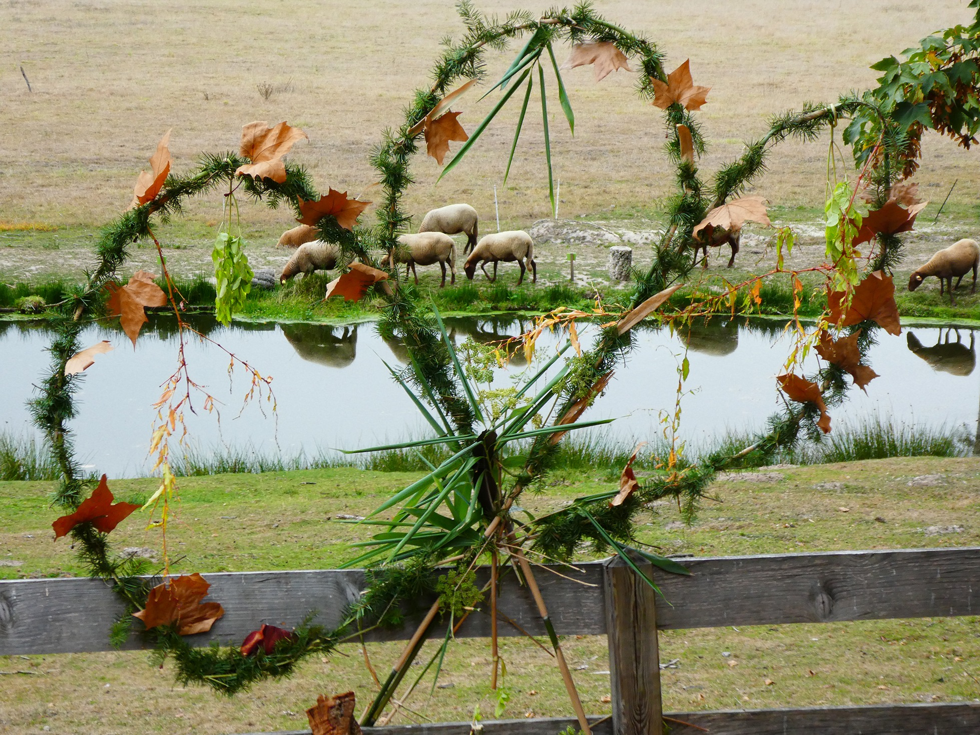 Mandala vegetal recolte foret