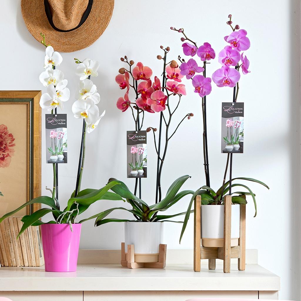 Selection orchidees VillaVerde