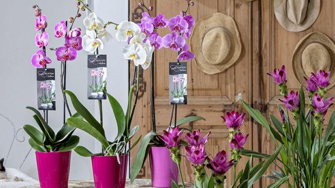 Orchidee selection VillaVerde