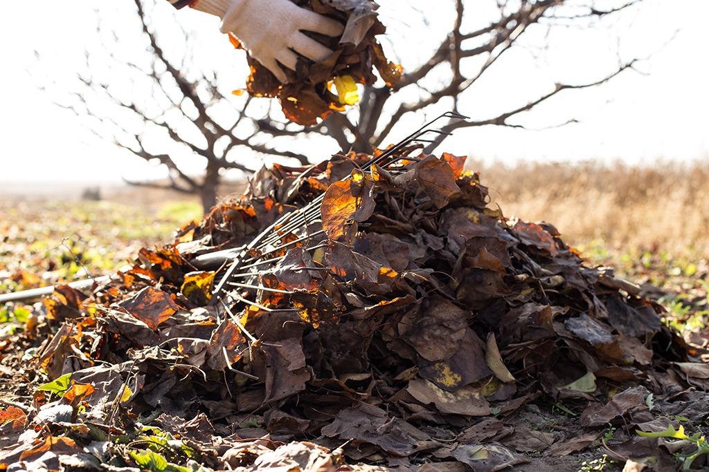 Compost arbre hiver