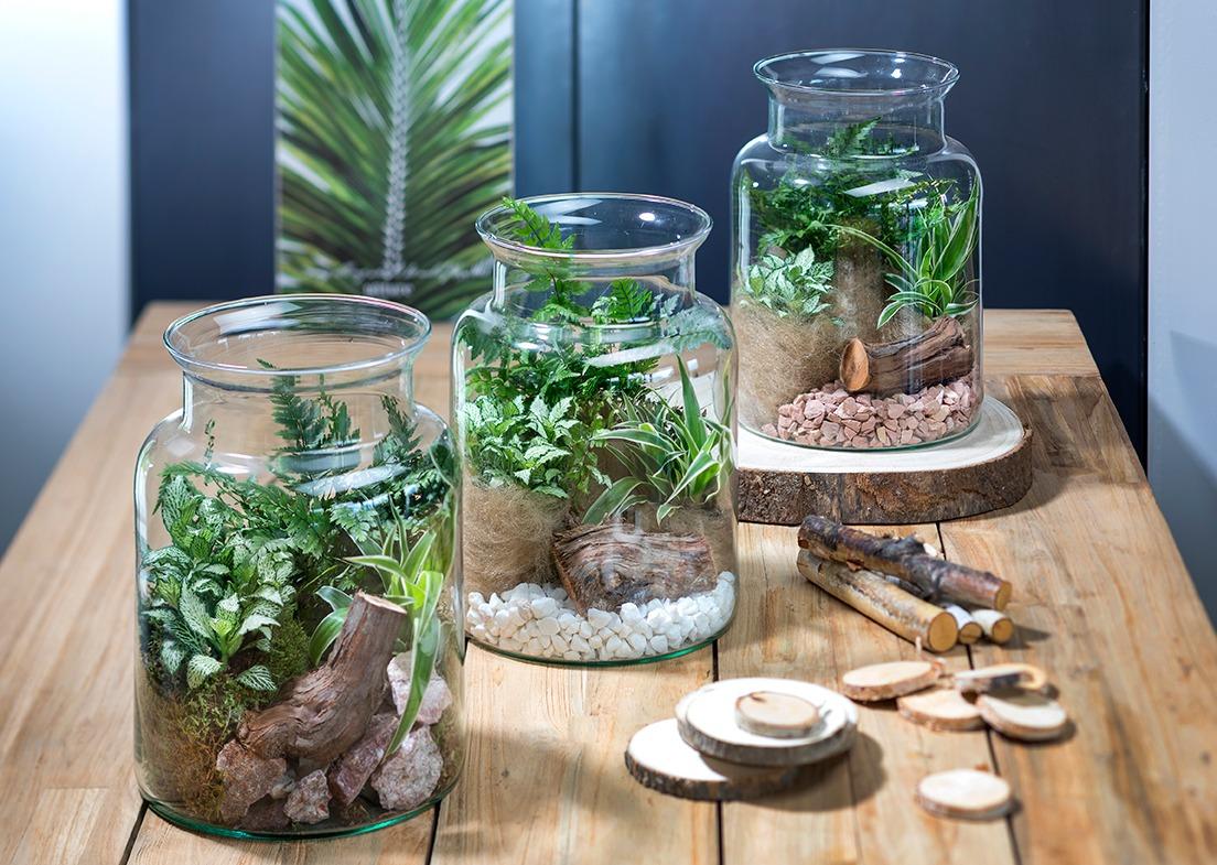 Terrarium Fermé Plante Grasse la folie du terrarium | mon jardin d'idées