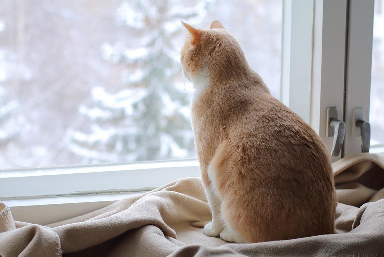 Chat devant la fenêtre