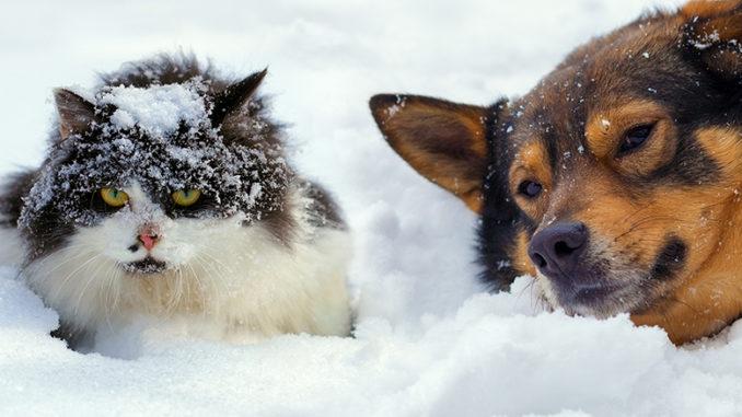 Chien et chat et le froid
