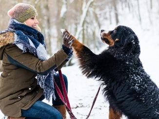 Emmener son chien à la montagne