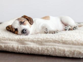 Quel couchage pour mon chien