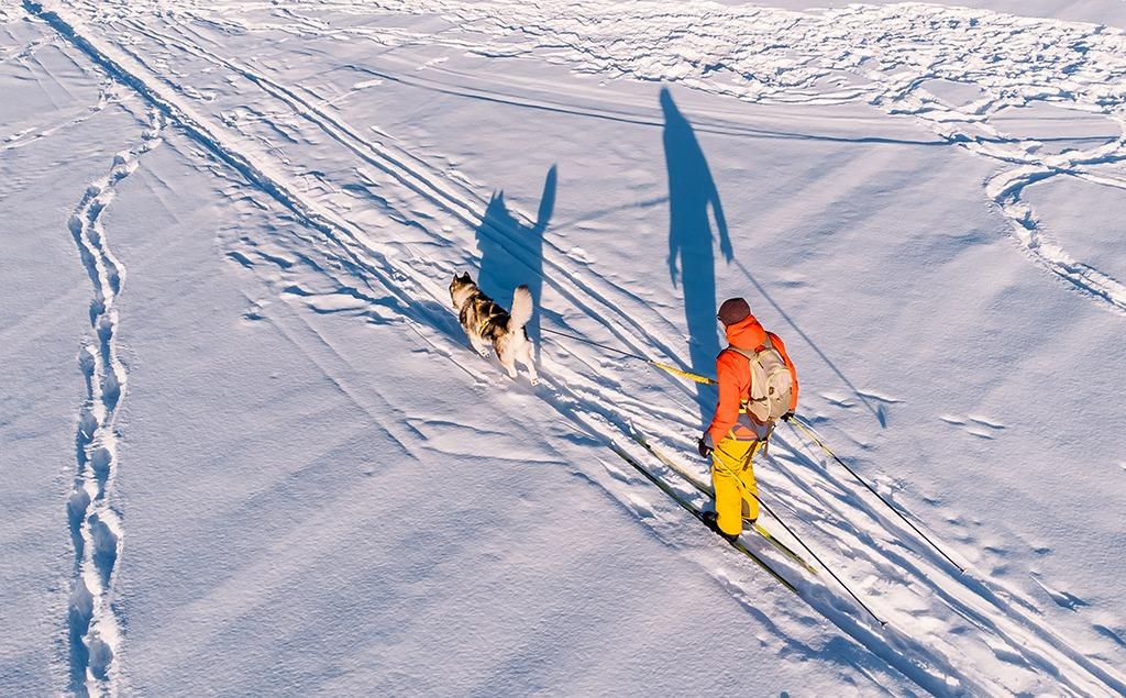 Ski-joering avec chien