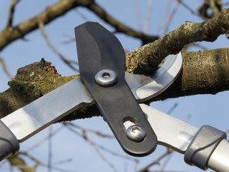 Tailler arbres et arbustes