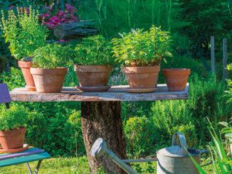 Aromatiques-table-jardin-pots
