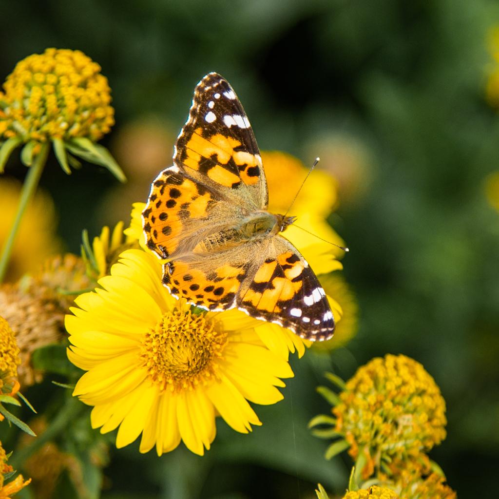Paillon fleur jaune jardin