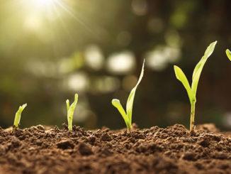 Semis-graine-germination