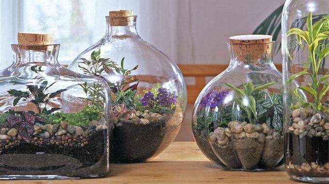 Terrarium plantes d'intérieur