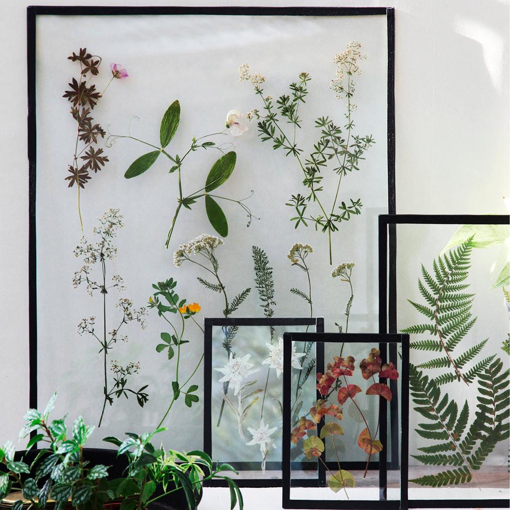 Atelier botanique cadres vegetaux