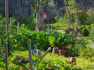 Jardin naturel permaculture