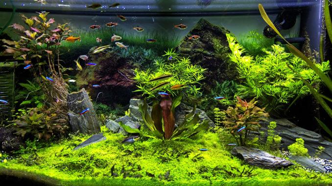 Aquascaping paysage aquarium