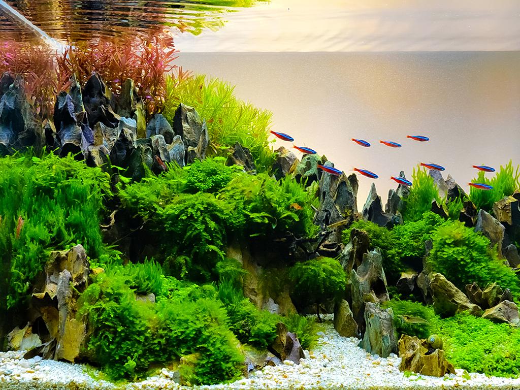 Aquascaping paysage aquatique marin